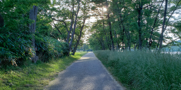 緑が気持ちいい中州公園のウォーキングコース